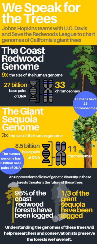 The infographic shows many facts and images regarding redwood trees.