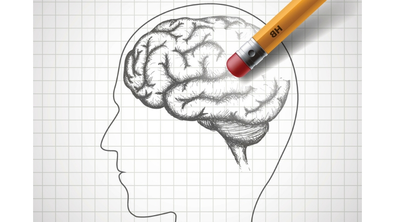 The image shows a sketch of a human head and brain.